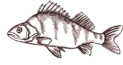 fish-icon-1